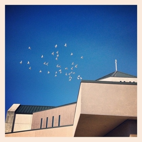 white doves at funeral mass at Divine Savior Church; photo by Ardith Ibanez Nishii